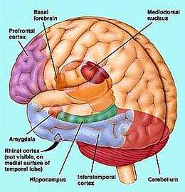 diagnose trauma zenuwstelsel